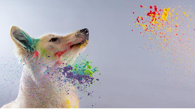Die Fellfarben der Hunde