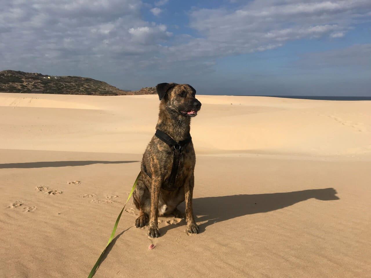 Hund mit Flexleine am Strand