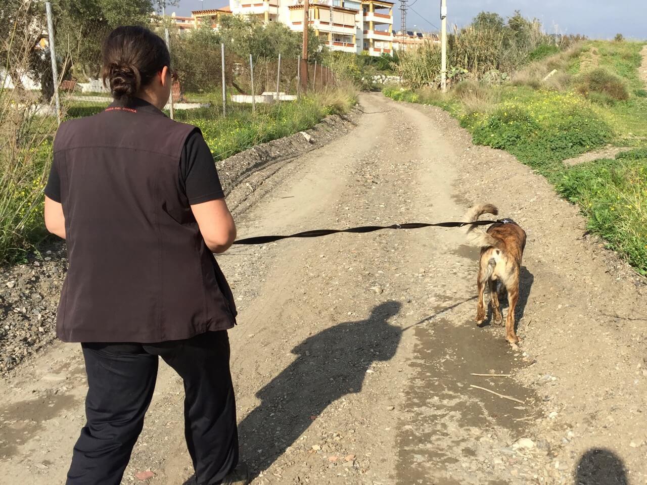 3 Meter lange Hundeleine in der Praxis