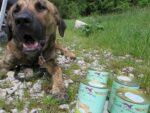 Ein Hund liegt auf einer Wiese und schaut mit offenem Maul scheinbar sprechend in die Kamera vor ihm ein paar Hundefutterdosen