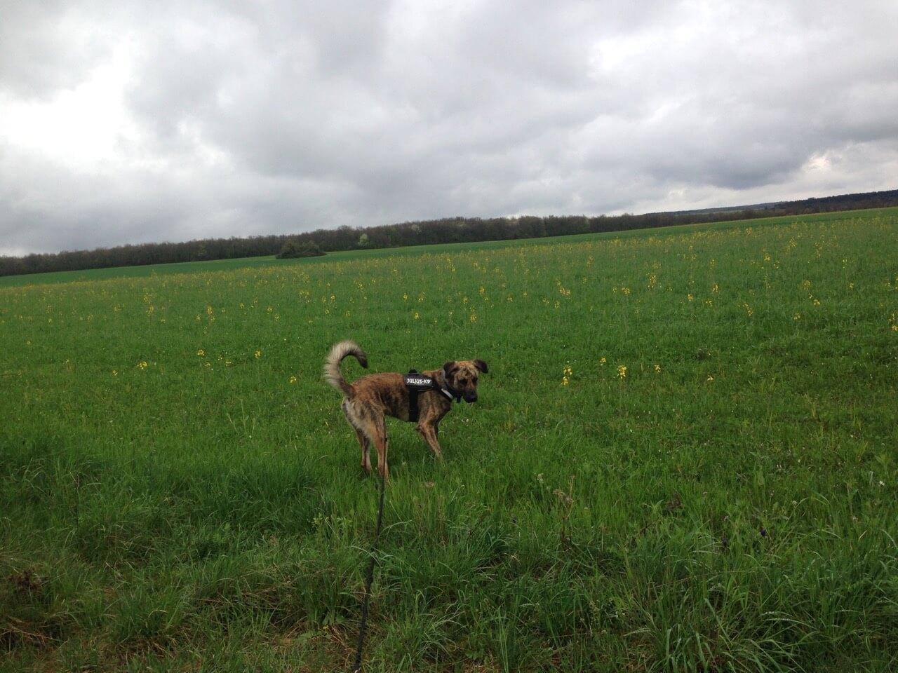 Hundegeschirr im Praxistest
