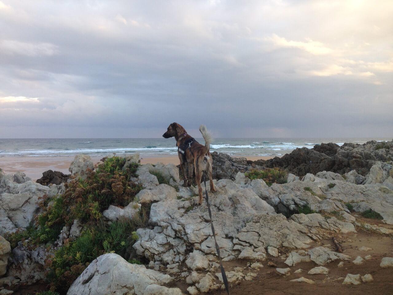 Hund mit K9 Geschirr am Strand