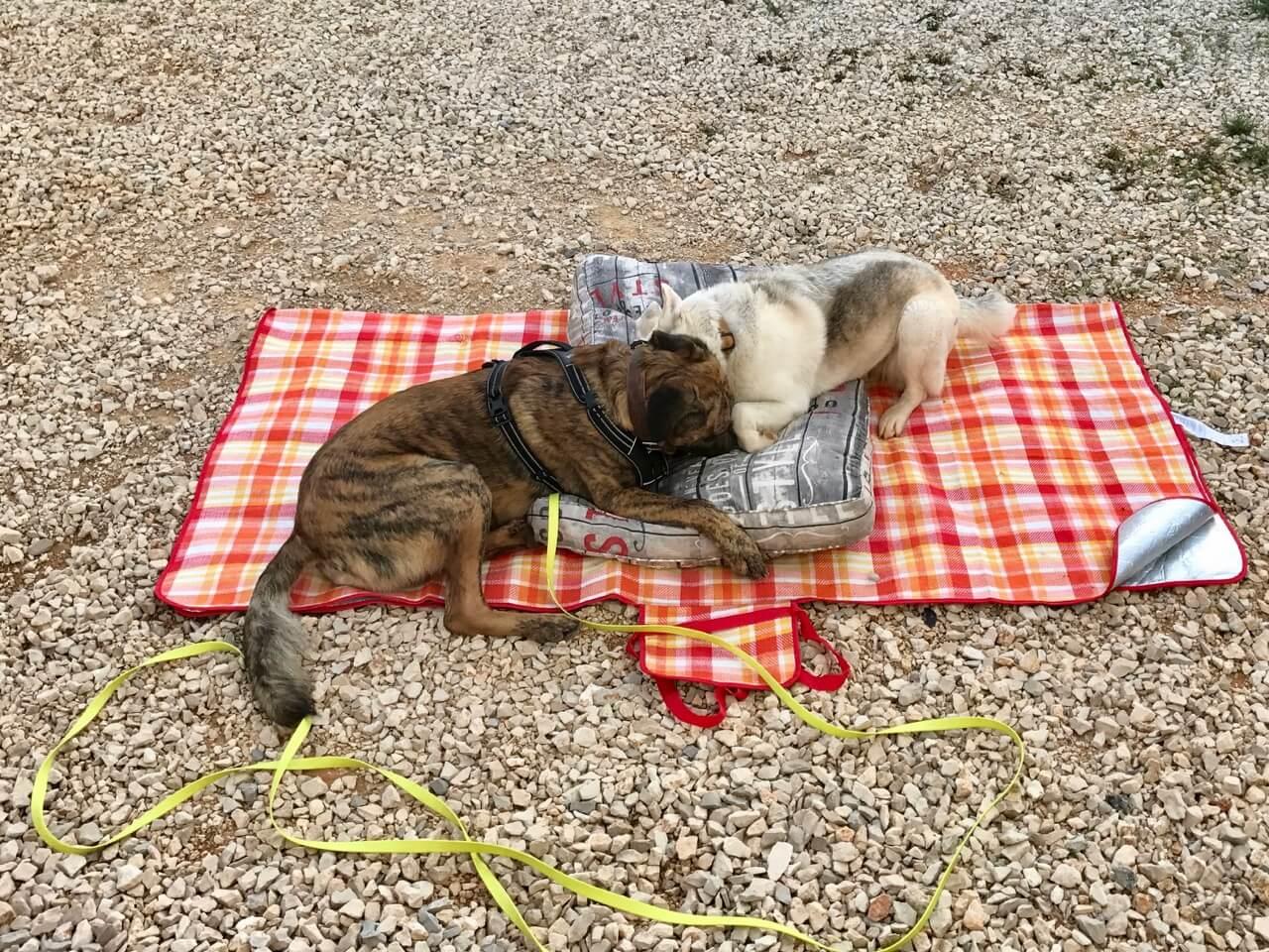 Chief samt Geschirr im Kontakt mit anderen Hunden
