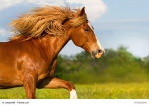 Gesunde Pferde kann man schon am äußeren Erscheinungsbild erkennen