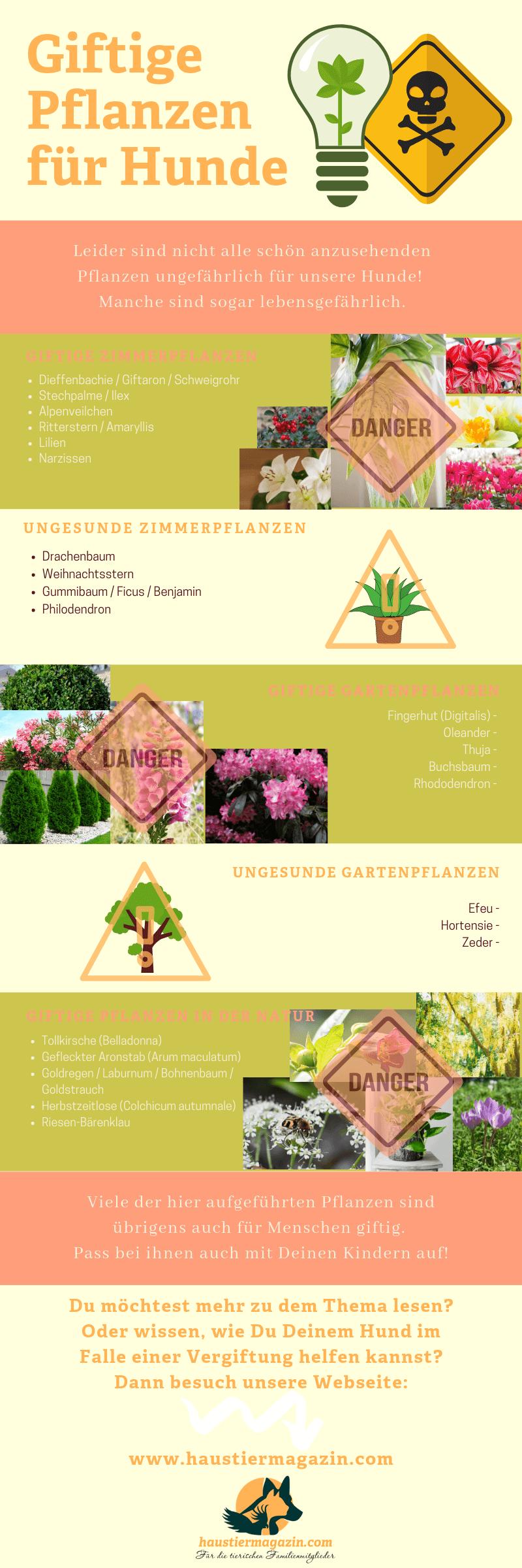 Infografik mit Namen und Bildern von giftigen Pflanzen für Hunde aufgeteilt in sehr giftige und weniger giftige Zimmer- und Gartenpflanzen.