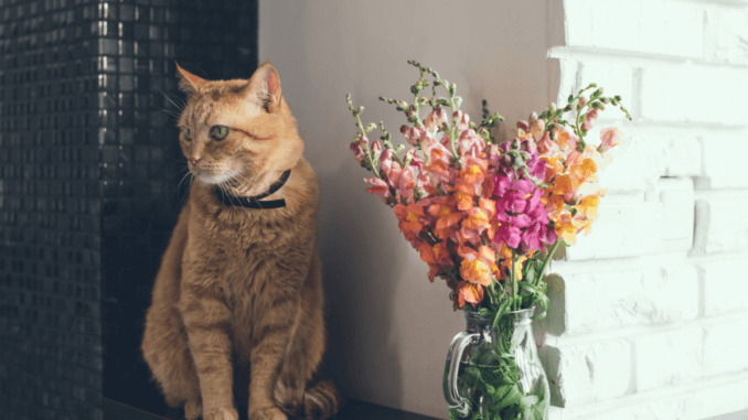 Katze mit Blumenstrauß