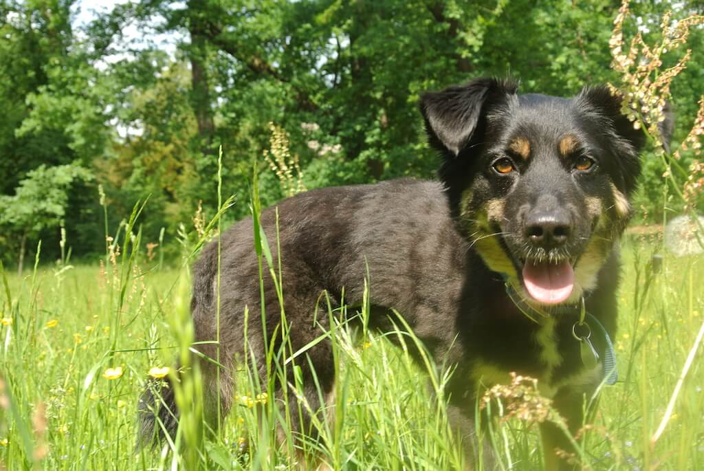 "Green Petfood ist ""Sirka approved"""