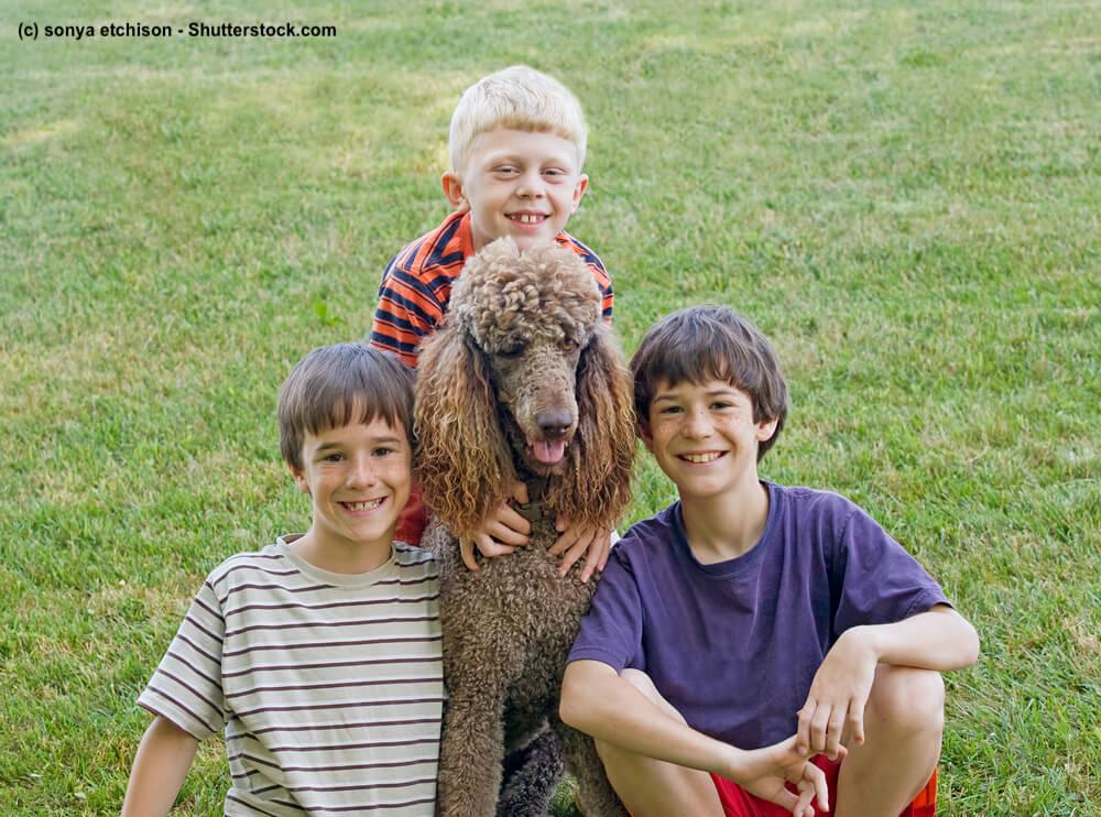 Brauner Großpudel mit Kindern