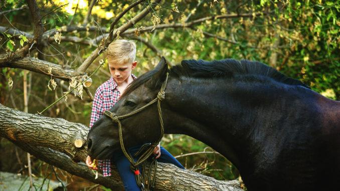 Grundausstattung Pferd - Kind streichelt schwarzes Pony vor Wald