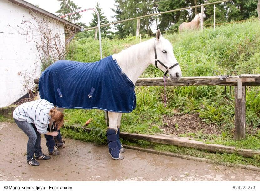 Schimmel wird mit Decke und Beinschutz versorgt