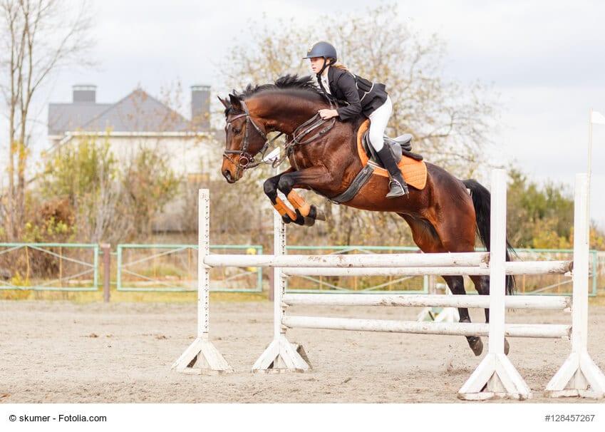 Eine gute Pferdeausbildung kostet viel Geld