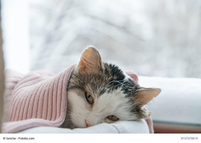 Zugedeckte, kranke Katze