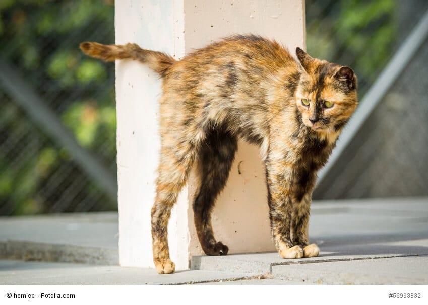 Katze markiert an einer Säule