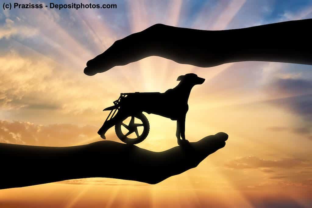 Hilfsmittel für Hunde helfen bei einem glücklichen und erfüllten Hundeleben