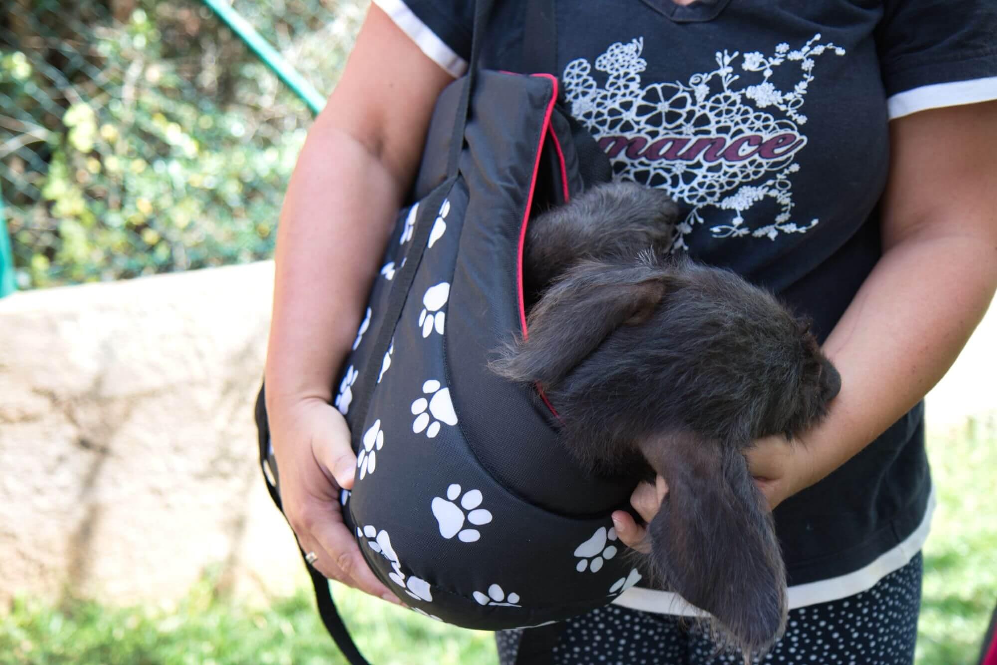 Schwarzer Hund in einer Hundetragetasche von Hobbydog