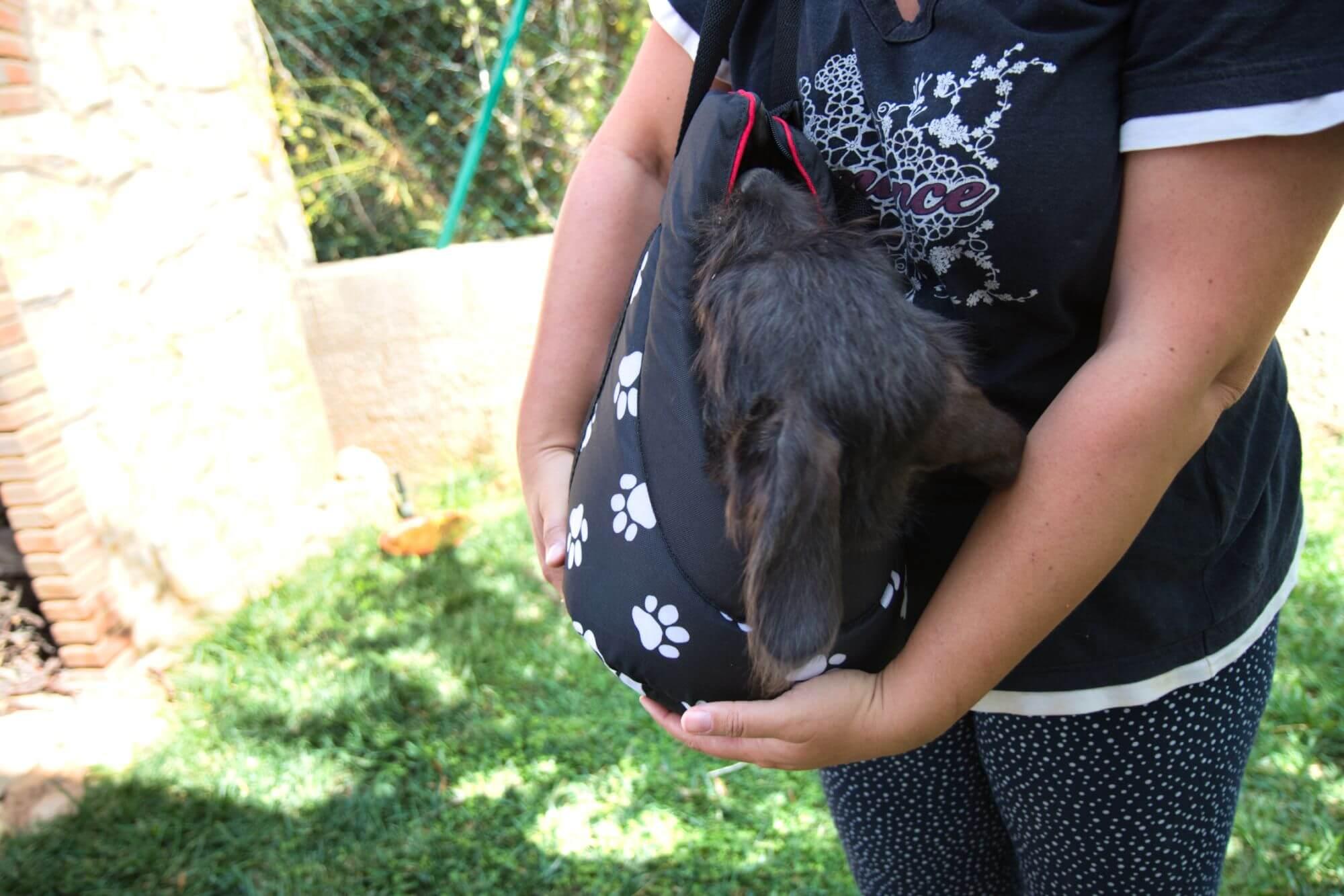 Kleiner schwarzer Hund in einer Hundetasche von Hobbydog.