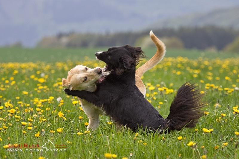 Spielen und toben gehört auch für Hunde mit Behinderung zum Leben dazu