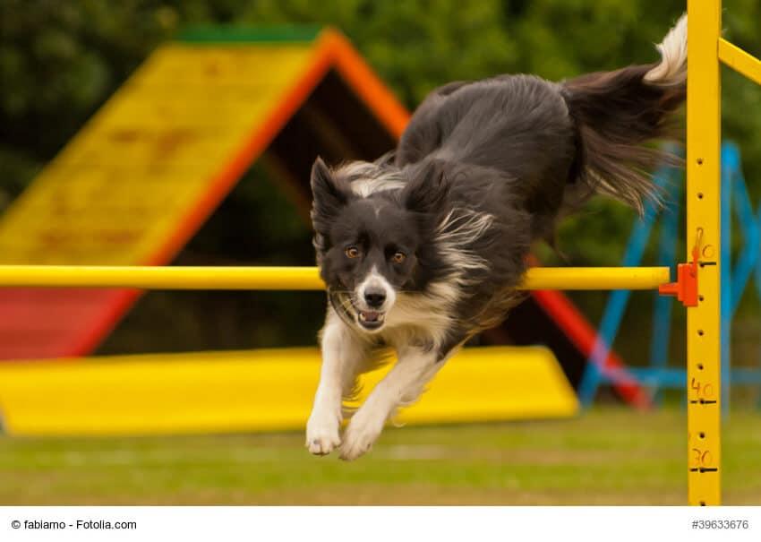 Sportliche Hunde benötigen viel Wasser
