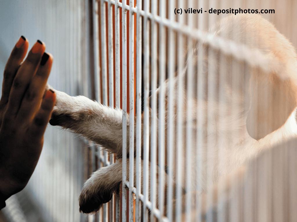 Hund gibt Pfote durch den Käfig