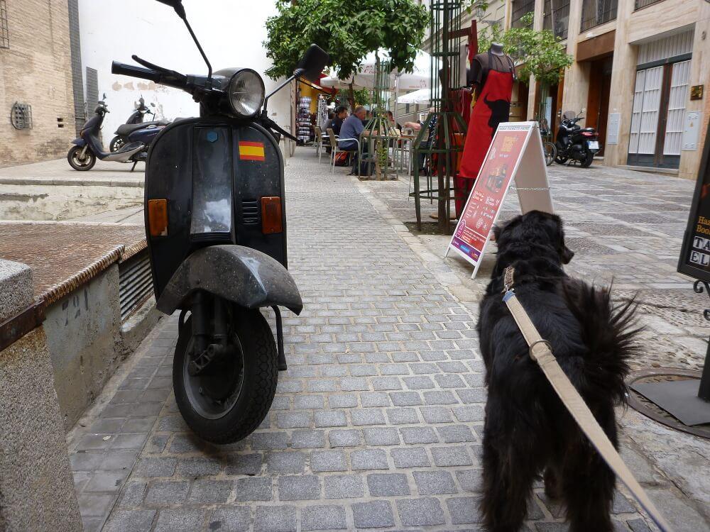 Schwarzer Hund an Leine von hinten in einer Stadt