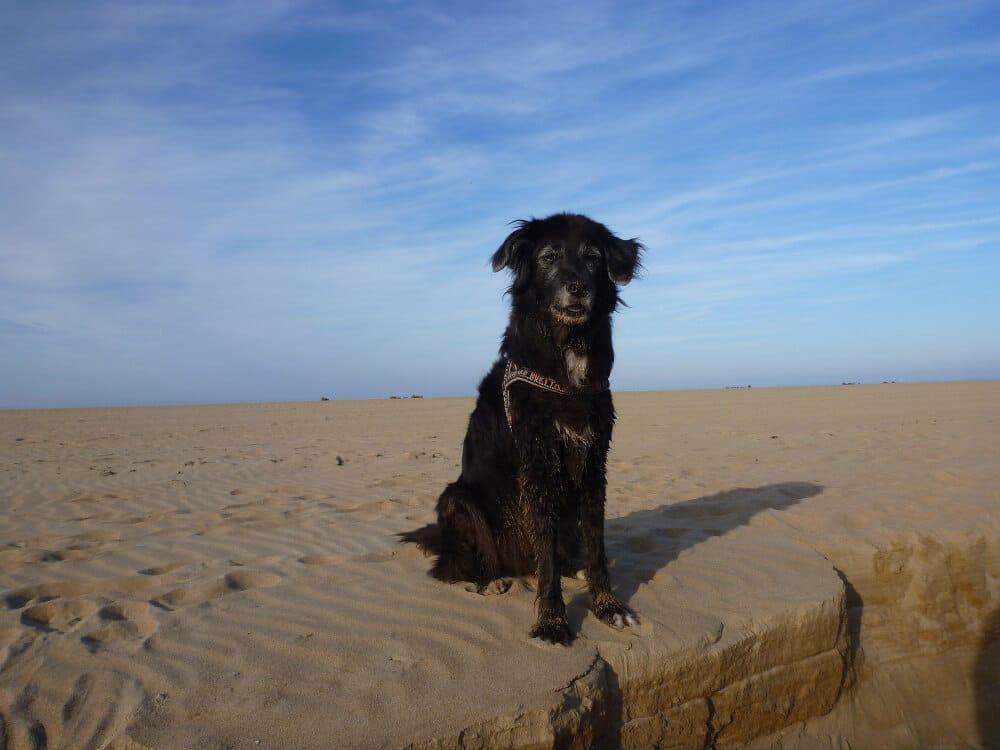 Schwarzer Mischling sitzt am Sandstrand