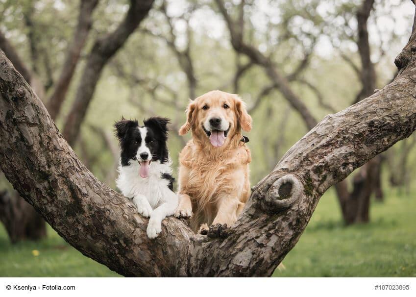 Hunde Freunde zusammen