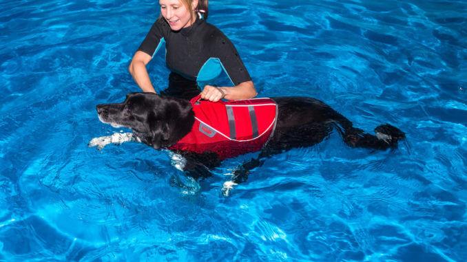 Physiotherapie für dunklen Hund im Wasser mit Therapeutin