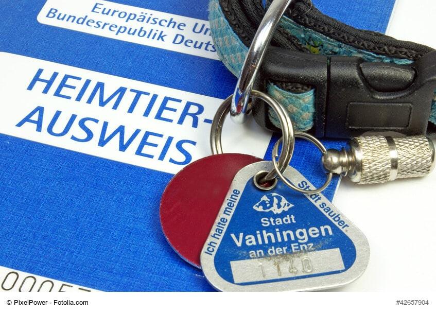Hundehalsband mit Steuermarke und Heimtierausweis