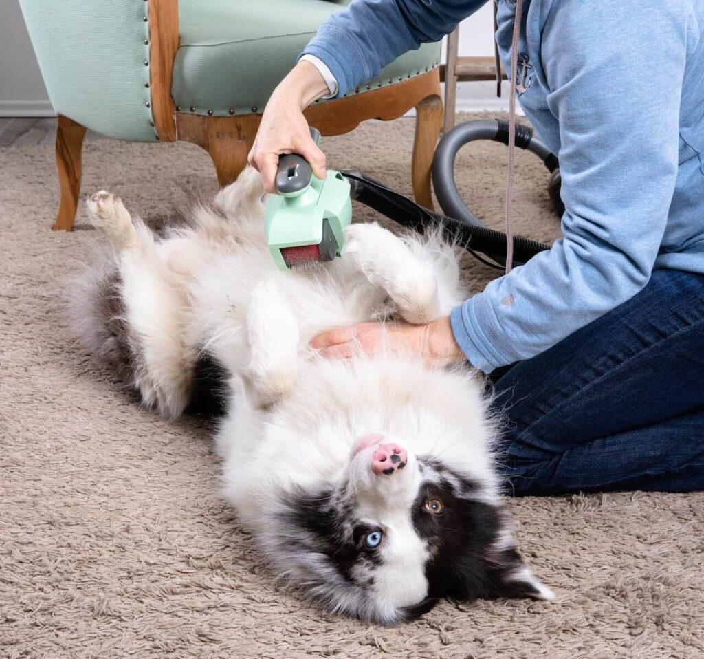 Ein Hund liegt auf dem Rücken auf einem Teppich, neben ihm kniet eine Frau und bürstet ihn mit einer mintfarbenen Fellbürste, die an einen Staubsauger angeschlossen ist.