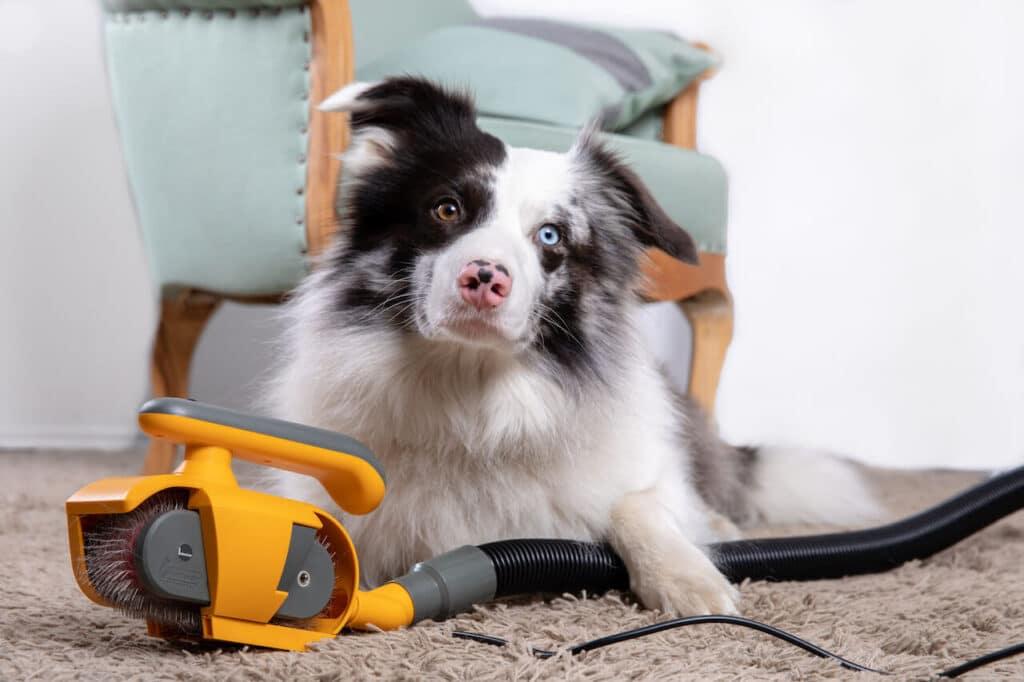 Ein Hund liegt aufmerksam schauend hinter einer gelben elektrischen Fellbürste von Petyphoria.