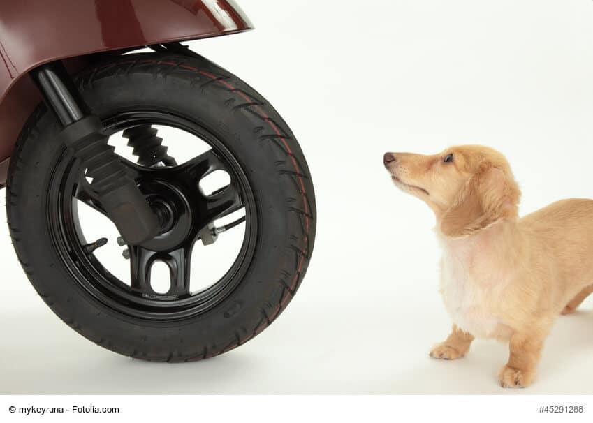 Der vordere Teil eines Rollers mit Reifen vor weißem Hintergrund und davor steht ein kleiner Hund und schaut erschrocken