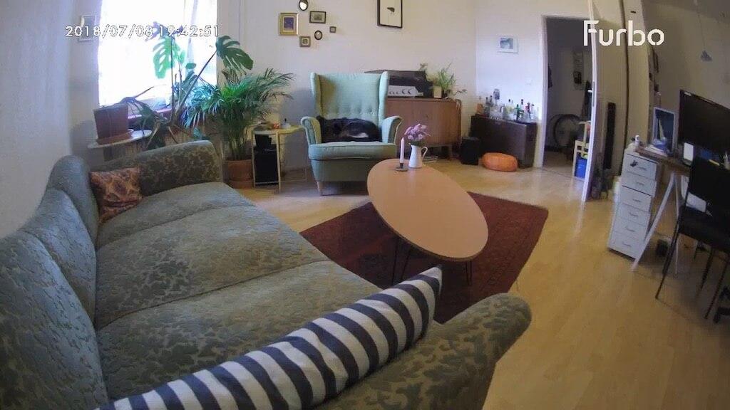 Bild von der Hundekamera Furbo in ein Wohnzimmer mit einem schwarzen Hund, der auf einem Sessel liegt und schläft