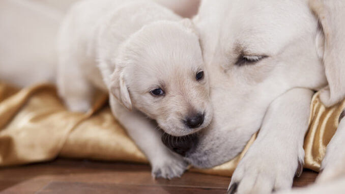 Schlafende Hundemama mit Welpe