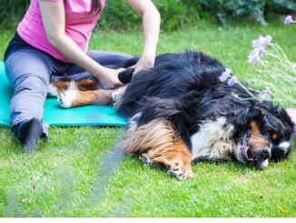 Hundephysiotherapie - Dunkler Hund mit langem Fell liegt auf einer Isomatte und wird massiert