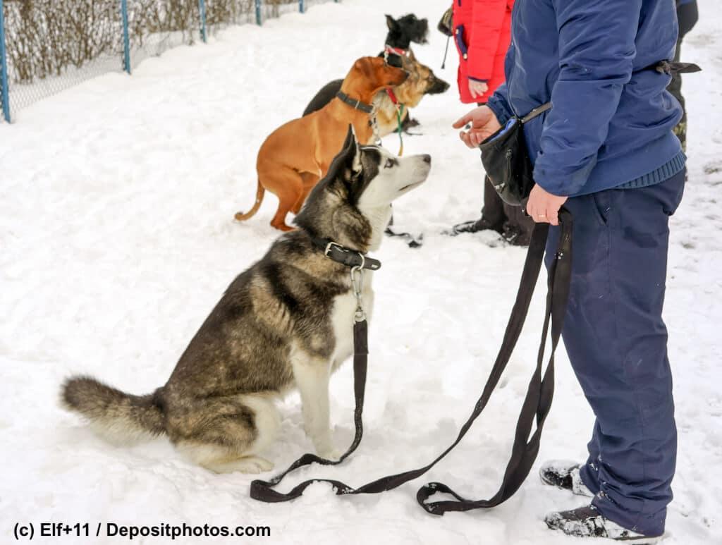 Hunde sitzen in einer Reihe im Schnee vor ihren Herrchen und Frauchen