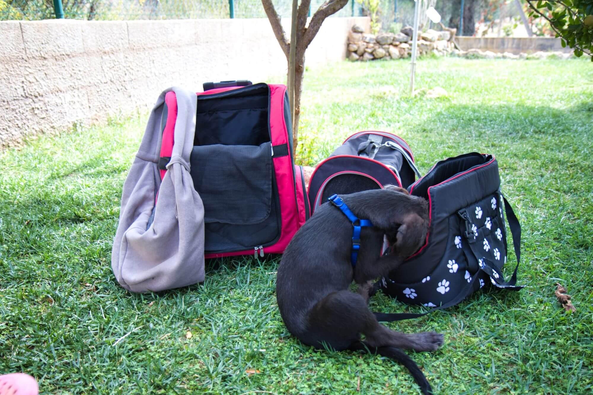 Je nachdem wie groß dein Hund ist und wofür du sie benutzen willst, suchst du dir deine Hundetragetasche aus.