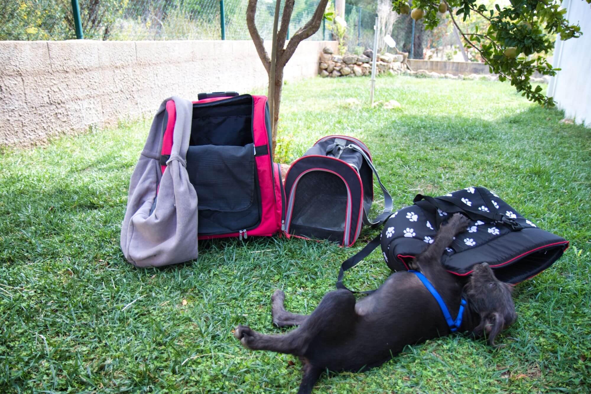 Natürlich muss dein Vierbeiner hinein passen - aber optisch gefallen darf dir deine Hundetragetascge auch.