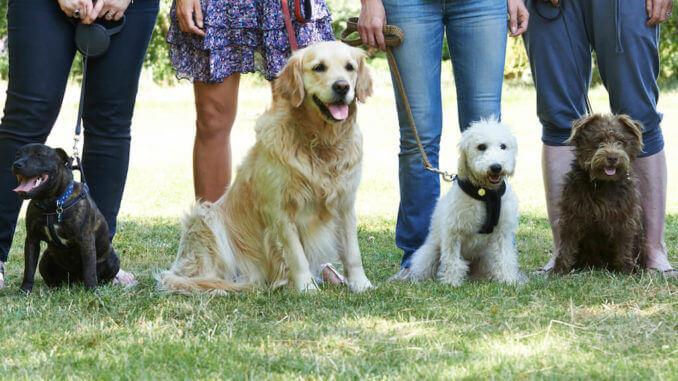 Vier sitzende Hunden vor den Beinen ihrer Besitzer.