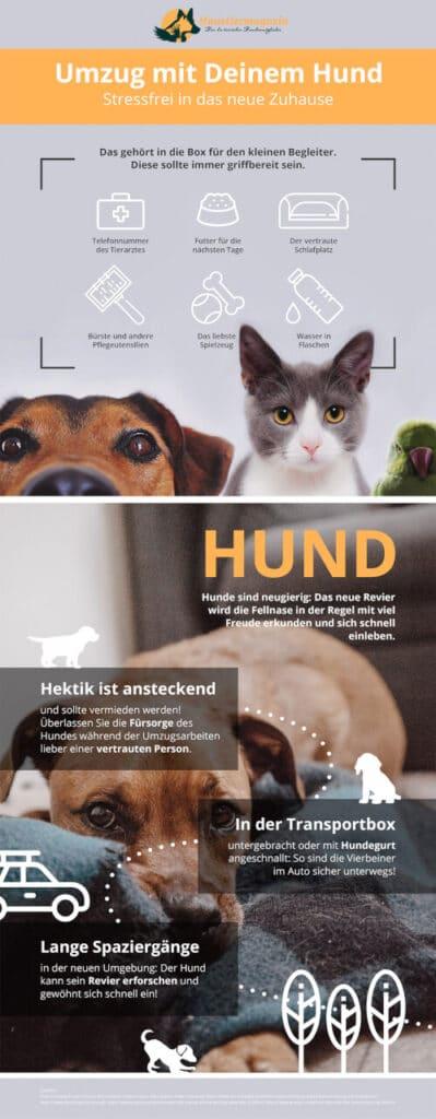 Infografik zum Umzug/Einzug mit deinem Hund