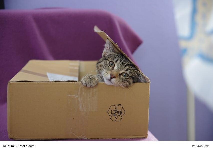 Intelligenzspielzeug Katzen selber bauen