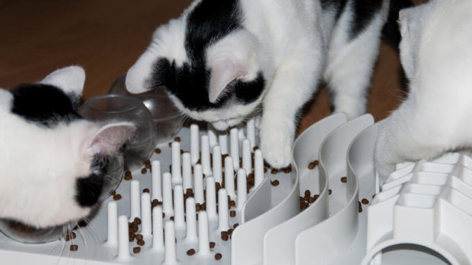 Intelligenzspiel für Katzen selber bauen