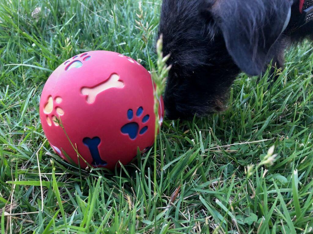 Beim Snackball von Nobby fallen Belohnungen aus dem Ball, wenn er bewegt wird.
