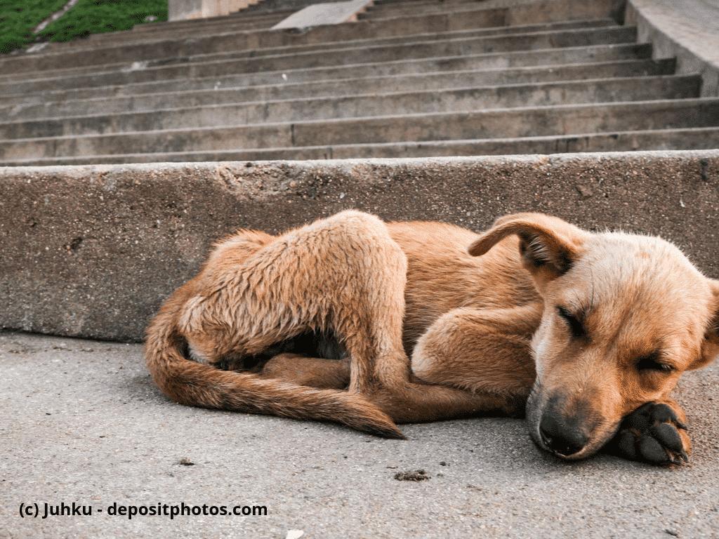 Junger und abgemagerter Streuner schläft