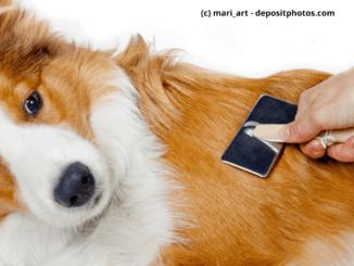 Körperpflege Hund Fell wird gekämmt