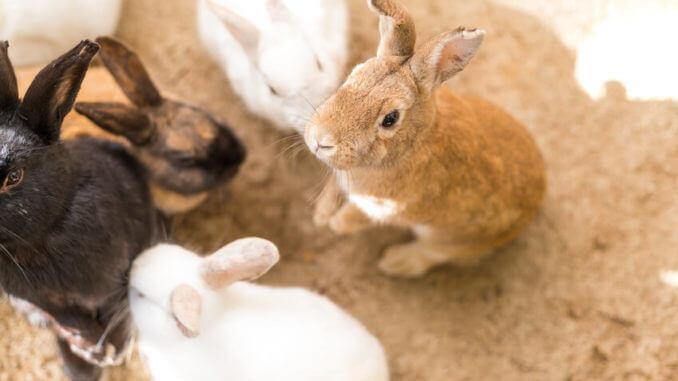 Kaninchen kaufen - Ein Ratgeber,