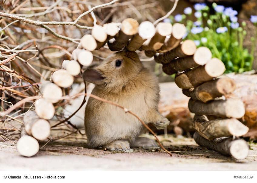 Kleines hellbraunes Kaninchen versteckt sich unter einer kleinen Spielzeug Brücke