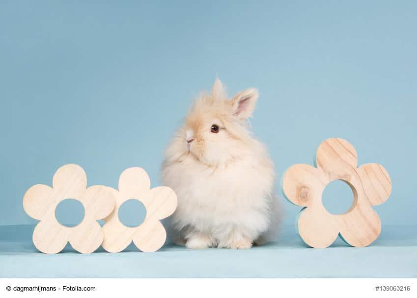Kleines, hellbraunes Teddi Kaninchen zwischen Blumen