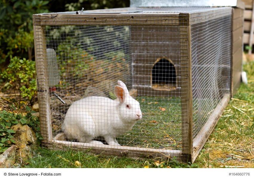 Weißes Kaninchen sitzt in einem viel zu kleinen Käfig