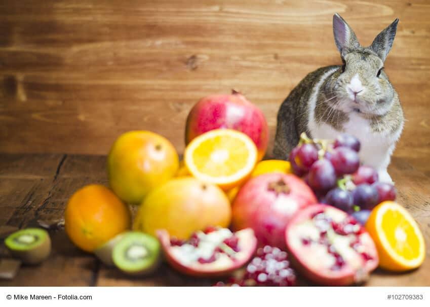 Grau weisses Kaninchen sitzt neben einem Der aus Obst und Gemüse