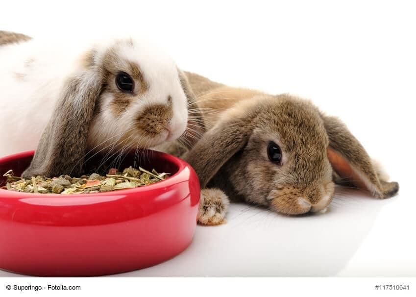 Ein weißes und ein braunes Kaninchen vor einem roten Futternapf mit Trockenfutter